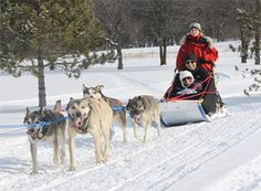 Dog Sledding Tours at Boyne Highlands, Harbor Springs, Michigan  #puremichigan
