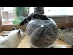 If It Fits, I Sits: The Supercut. this is literally my favorite video ever