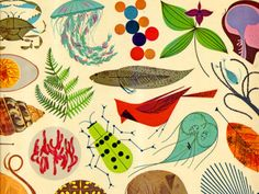 graphic-novel:    The Giant Golden book of Biology - An introduction to the Science of Life  By Gerald Ames and Rose Wyler.Illustrated by Charley Harper. c 1961 Golden Press.  for more kids books and works by Charles harper, check out grainedit.com  (by Grain Edit.com)