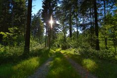 in the woods by Knud Erik Simonsen on 500px