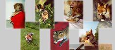 Viele Infos über Füchse