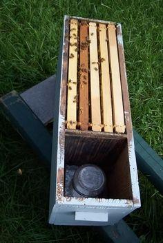 Queen Rearing - Beekeeping