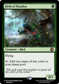 A simple Birds of Paradise.