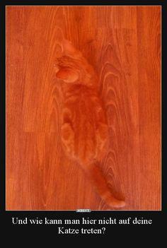Und wie kann man hier nicht auf deine Katze treten?.. | Lustige Bilder, Sprüche, Witze, echt lustig