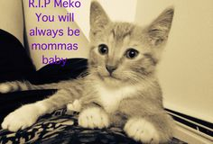 My baby boy Feline Leukemia, Baby Boy, Cats, Animals, Gatos, Animales, Kitty Cats, Animaux, Animal Memes