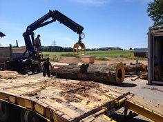 Unloading the log for the Treekitchen. Oak Logs, Natural Soul, Tree Trunks, Oak Tree, Rough Cut, Wood Species, Solid Wood, Woodworking, Yard