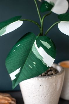 House Plants 411164640980974176 - paper White Knight Philodendron Source by projektleiterin Foliage Plants, Potted Plants, Garden Plants, Indoor Plants, Indoor Gardening, Urban Gardening, Hydroponic Gardening, Urban Farming, Air Plants
