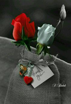 Montage photo renewilly a pesar - Pixiz White Roses, Red Roses, Color Splash, Color Pop, Splash Photography, Rosa Rose, Montage Photo, Arte Floral, Photomontage