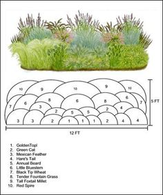 Flower Garden Landscaping Garden Designs Ideas 2018 : ornamental grass design ideas ( would have to be adapted to our zone).Flower Garden Landscaping Garden Designs Ideas 2018 : ornamental grass design ideas ( would have to be adapted to our zone) Ornamental Grass Landscape, Ornamental Grasses, Landscape Grasses, Desert Landscape, House Landscape, Garden Landscape Design, Garden Design Plans, Landscaping Plants, Front Yard Landscaping