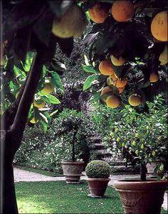"""Valentinos"" garden, Tuscany, Italy...I so loved Rudolph Valentino!!! ;-)"