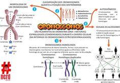 Cromossomos | nerdcursos Mental Map, Study Notes, Medical School, Study Tips, Genetics, Biology, Medicine, Education, Taehyung