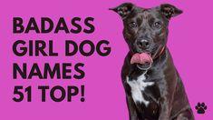 🐾 Badass Girl Dog Names 51 BEST & CUTE & TOP Ideas | Names
