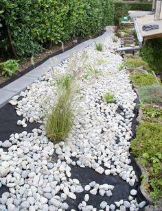 Steinbeet anlegen: Die Weißen Steine betonen die schönen Pflanzen