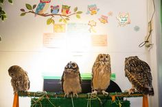 Peek inside the Japanese OWL cafe -- where you play and pet with baby owls!! Exclusive photos from Tokyo's Fukuro no Mise are on La Carmina blog >>   http://www.lacarmina.com/blog/2014/08/tokyo-japan-owls-theme-cafe/  pet owls japan cafe