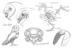 My sketches and designs for week 3 of the creature anatomy course I'm in. Week 3 focused on bird and dinosaur anatomy. I decided to combine owl anatomy and the anatomy of abelisaurs for my creature. Below you can see a few of the studies I did of owls Bird Drawings, Animal Drawings, Animal Sketches, Drawing Sketches, Owl Skeleton, Guardians Of Ga'hoole, Nature Sketch, Anatomy Drawing, Owl Art