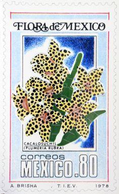 Plumería Mika, 2014 Cacalosuchil, Plumeria rubra, 1978 Intervención: Emilia Sandoval Museo de Filatelia