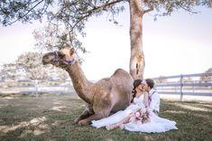 This stunning bohemian couple shooting at summer land camel farm. Bridal Shoot, Couple Shoot, Camel, Bohemian, Photo And Video, Summer, Animals, Beauty, Instagram