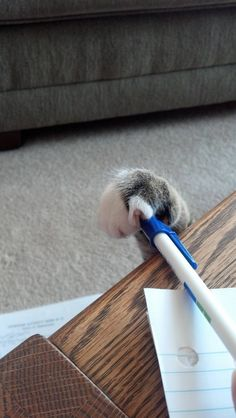 Pen thief! - Imgur   ...........click here to find out more     http://googydog.com
