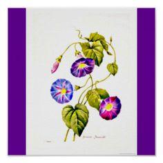 Poster-Botanicals-Pierre Joseph Redoute 6