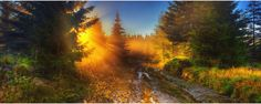 (via Pandora by `werol on deviantART) Prints are available. Morning Dew, Sunlight, Scenery, Pandora, Country Roads, In This Moment, Deviantart, Gallery, Nature