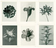 New waves of publishing and design in print. Maths In Nature, Karl Blossfeldt, Macro Shots, Horticulture, Natural World, Botany, Black And White Photography, Flora, Gallery Wall