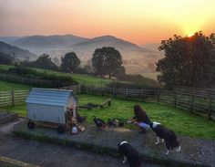 Mellowness. Autumn mornings. Sunrise. Nip in the air. Leaves starting to turn. Dew. The beginnings of my favourite time of year. #autumn #hen #chicken #farm #hillfarm #sheepdog #shepherdess #sunrise #sun shepherdess.co.uk