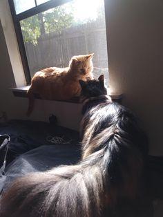August & Odin love the sunshine.