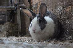 Bunny - Rabbit - Cute.