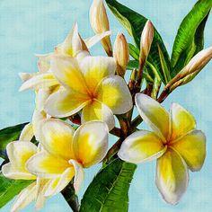 tropical flowers- plumeria, sometimes called frangipani, native to Hawaii- floral art
