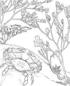 seascape ocean coloring page