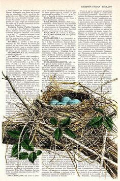 Bird nest print on book page - Etsy