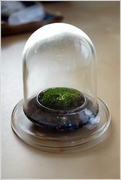 Terrarium - I like the tiny silver bowl base.  a cute complement to have glass and silver !!