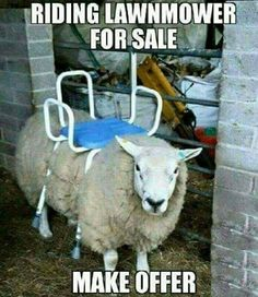 Ride-on mower stands for sale # fun # animals - WITZIG - Funny Animal Memes, Funny Animal Videos, Videos Funny, Funny Dogs, Funny Animals, Cute Animals, Funny Shit, Hilarious, Fun Funny