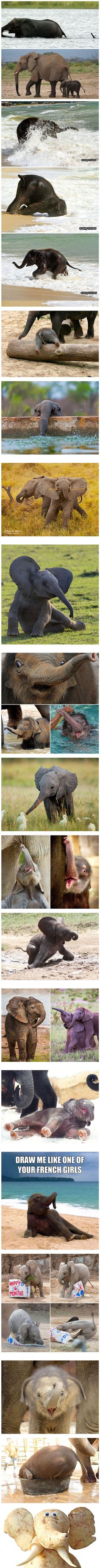 Baby Elephants That Will Instantly Make You Smile