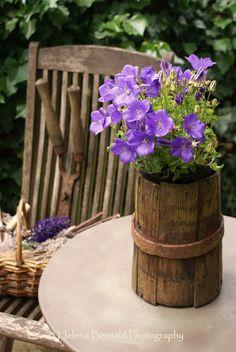 Rustic Purple - Garden Ideas