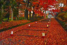 京都日和 〜 Kyoto Biyori ~ : 真っ赤なもみじの参道 〜毘沙門堂〜(26.11.29朝撮影)