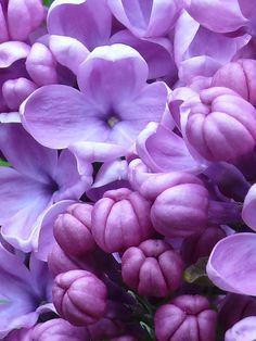 Spring purple splash