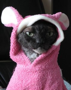 Cats in costumes | bootlegbartender.com | Starla (Merivale) by Cat Hospitals, via Flickr