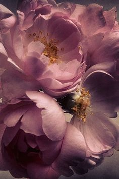Roses by Nick Knight