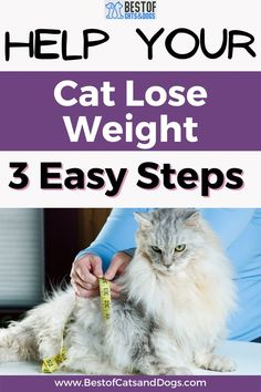If You Suspect Your Cat Is More Fat Than Fit, Consider Scheduling An Appointment With Your Cat's Veterinarian For A Complete Checkup To Rule Out A More Serious Cat Health Issue Like An Infection, Metabolic Disease, Heart Disease, Or... Read More Here! #CatObesity #OverweightCats #CatHealthRisk #ObeseCats