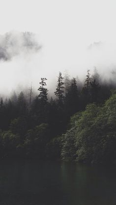 Foggy forest wallpaper..