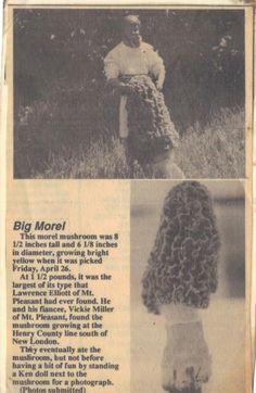 Largest Morel Mushroom Ever!!