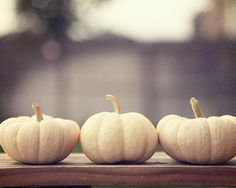 Pumpkin Food Photography Print wood by AmeliaKayPhotography White Pumpkin Decor, White Pumpkins, Fall Pumpkins, Mini Pumpkins, Pumpkin Recipes, Fall Recipes, Ghost Pumpkin, Family Halloween, Colors