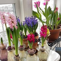 "459 Likes, 11 Comments - Joe Ruggiero (@joeruggiero_collection) on Instagram: ""@susanf14 #spring #bulbs #hyacinth #tulips #gardenroom"""
