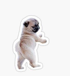 Pug Puppy Sticker