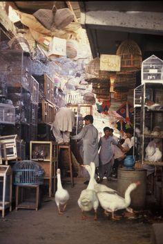 ❤❤❤ Copyrights unknown. Pet Market - Pakistan. Collection ßÿ Ĵűĝŋî's Ĵaŋîa