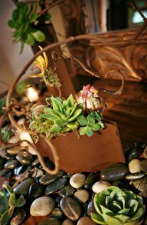 Succulents, rocks, orchids,moss and twigs