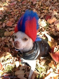Punk Rock Puppy - 2012 Halloween Costume Contest