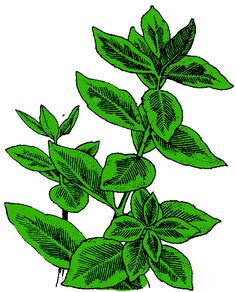 http://www.arthursclipart.org/plants/plants/euonymus.gif