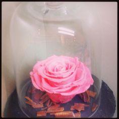 roses stabilis es on pinterest roses vase and bonbon. Black Bedroom Furniture Sets. Home Design Ideas